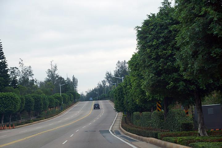 我們為何要一再地失去—為金門環島北路殘存的木麻黃請命