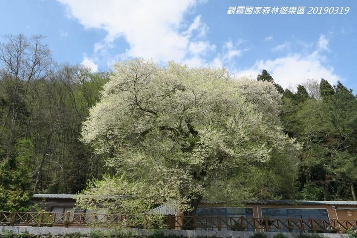 2021 櫻花季+登山步道,出門賞櫻順便健行!