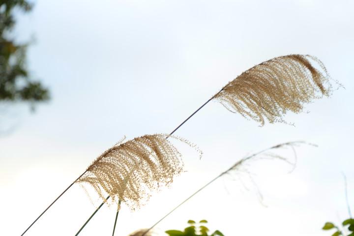 S步道 台中 萬豐環山步道 茂林修竹展望好 霧峰區